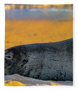 Benny At Sunset Fleece Blanket