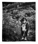 Bernese Mountain Dog Black And White Fleece Blanket