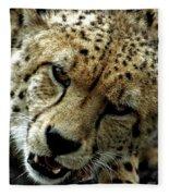 Big Cats 50 Fleece Blanket