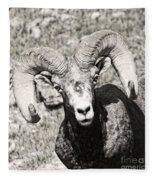 Big Horn Ram Bandw 5 Fleece Blanket