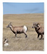 Big Horn Sheep Family Fleece Blanket