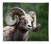 Big Horn Sheep Fleece Blanket