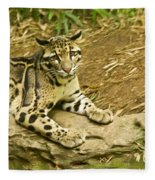 Big Kitty Cat Fleece Blanket