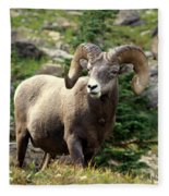 Bighorn 1 Fleece Blanket