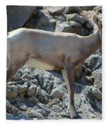 Bighorn Sheep Lamb Fleece Blanket