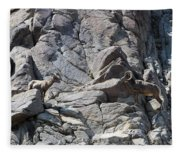 Bighorns Romantic Stare Fleece Blanket