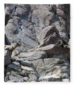Bighorns Romantic Stare Fleece Blanket
