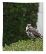 Bird On The Hedges Fleece Blanket