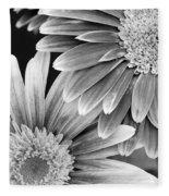 Black And White Gerber Daisies 3 Fleece Blanket