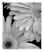 Black And White Gerbera Daisies 1 Fleece Blanket
