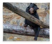 Black Bear Cub Sitting On Tree Trunk Fleece Blanket