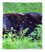 A Florida Black Bear Fleece Blanket