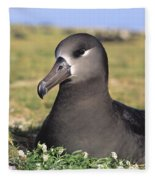 Black Footed Albatross Fleece Blanket