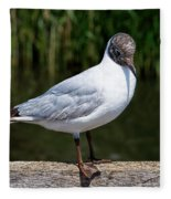 Black-headed Gull - Larus Ridibundus Fleece Blanket