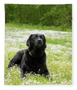 Black Lab Laying In A Field Fleece Blanket