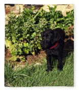 Black Labrador Retriever Puppy Fleece Blanket