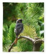 Black Redstart Fleece Blanket