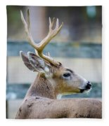 Black-tailed Buck Fleece Blanket