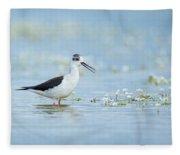Black-winged Stilt Fleece Blanket