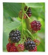 Blackberry Fleece Blanket