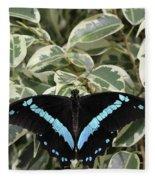 Blue-banded Swallowtail Butterfly Fleece Blanket