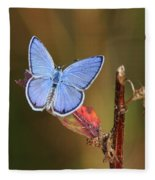Blue Butterfly On Leaf Fleece Blanket