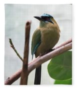 Blue-crowned Motmot Fleece Blanket