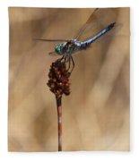 Blue Dragonfly On Brown Reed Fleece Blanket