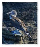 Blue-footed Booby Prize Fleece Blanket