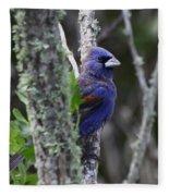 Blue Grosbeak In A Mangrove Fleece Blanket