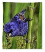 Blue Grosbeak On A Reed Fleece Blanket