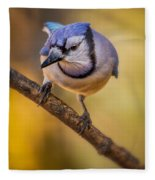 Blue Jay In Golden Light Fleece Blanket