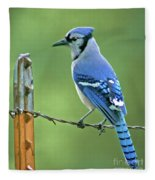 Blue Jay On The Fence Fleece Blanket