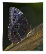 Blue Morpho.. Fleece Blanket