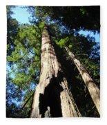 Blue Sky Big Redwood Trees Forest Art Prints Baslee Troutman Fleece Blanket
