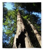 Blue Sky Big Redwood Trees Forest Art Prints Baslee Troutman Fleece Blanket