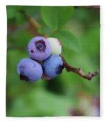 Blueberries On The Vine 3 Fleece Blanket