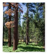 Bluff Lake Ca Fern Forest 3 Fleece Blanket
