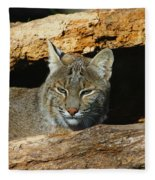 Bobcat Hiding In A Log Fleece Blanket