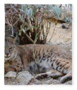 Bobcat Resting Fleece Blanket