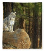 Bobcat Thoughts Fleece Blanket