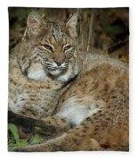 Bobcat Warming In The Autumn Sun Fleece Blanket