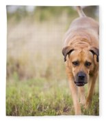 Boerboel Dog Fleece Blanket