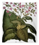 Botany: Tobacco Plant Fleece Blanket