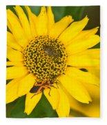 Box Elder Bug On False Sunflower Fleece Blanket