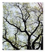 Branches Against Sky In Spring Outback Fleece Blanket