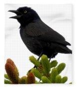Brewer's Blackbird Fleece Blanket
