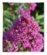 Brilliant Pink Blooming Phlox Flowers In A Garden Fleece Blanket