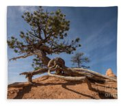 Bristle Cone Tree Fleece Blanket