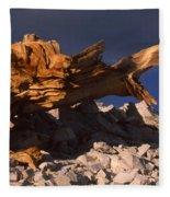 Bristlecone Pine - White Mountains Fleece Blanket